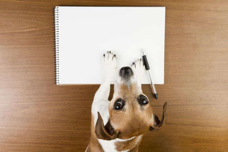Kalamurzing/Shutterstock.com