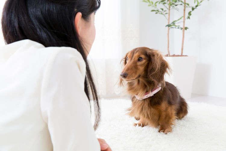takayuki/Shutterstock.com