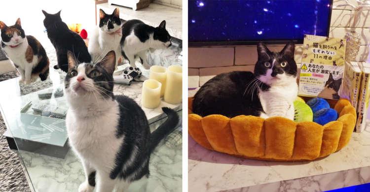 タイトルからは想像がつかない、ニャンコへの愛が詰まった一冊。『猫を飼うのをすすめない11の理由』♪