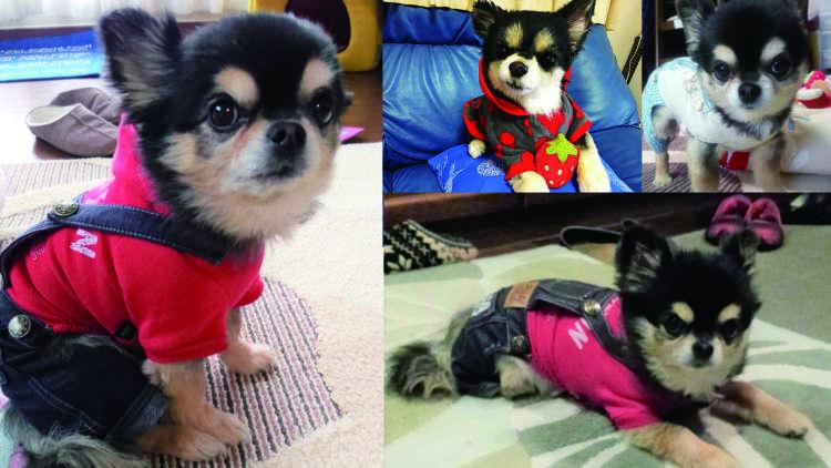 """12年間、家族を """"とりこ"""" にし続けた愛犬が最後に送ったサプライズ。"""
