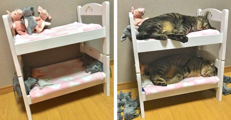 ドール用2段ベッドを自作♪ その結果 → あっという間にニャンコ専用の寝室に…(`;ω;´) 5枚