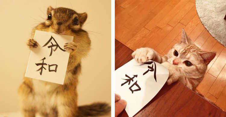 """【平成最後の写真集!】いよいよ始まる新時代。ペットと迎える""""令和""""が楽しみすぎた♡(7枚)"""