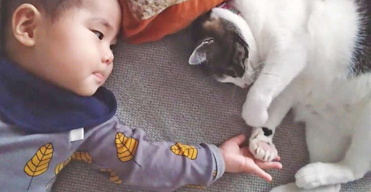 握手をしたい赤ちゃんと、なんだかんだで応じてくれる猫さん。ふたりのまったりなやり取りに和む♡