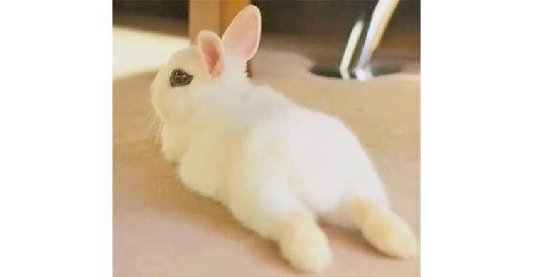 キリッとしたアイラインと、もふもふなお尻! ウサギさんの魅力的な姿に…恋に落ちそう♡(22秒)