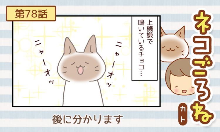 【まんが】第78話:【後に分かります】描き下ろし連載♪ ネコごろね(著者:カト)