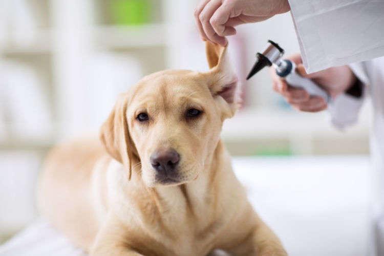 犬の臭いは、病気のサインである可能性も