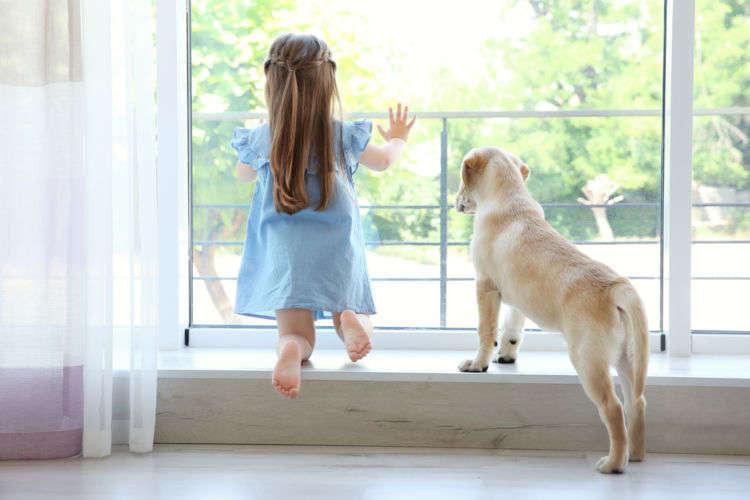 「犬」と「空間」、ダブルの臭い対策が効果的