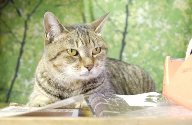 【猫びより】ネッコ店長とのドラマチックな出会い【常滑】(辰巳出版)