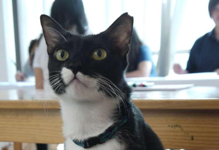 3匹の看板猫に会いに行こう!【クアラルンプール】