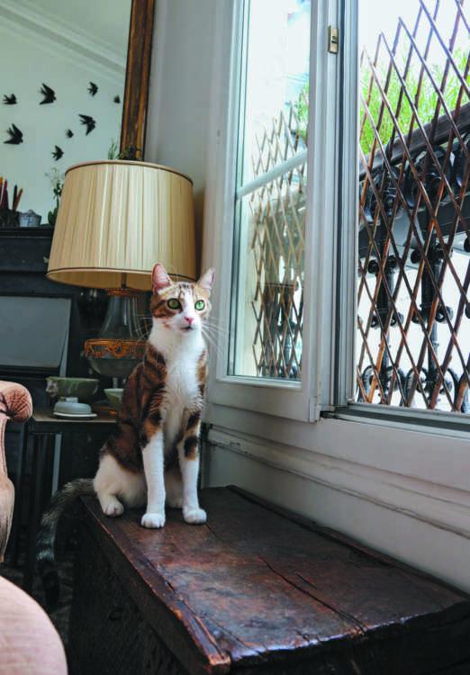 レストランと同様、美しい自宅で「僕も家族のひとり!」と堂々と振る舞うミルフィーユ