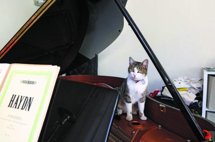 ピアノの蓋を開けると、中を探検。ピアニスト仲間の猫で、中に入ることが好きな猫は多いのだとか
