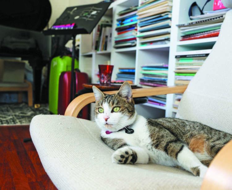 譜面が並ぶ前の椅子が、ミミのお気に入りの場所