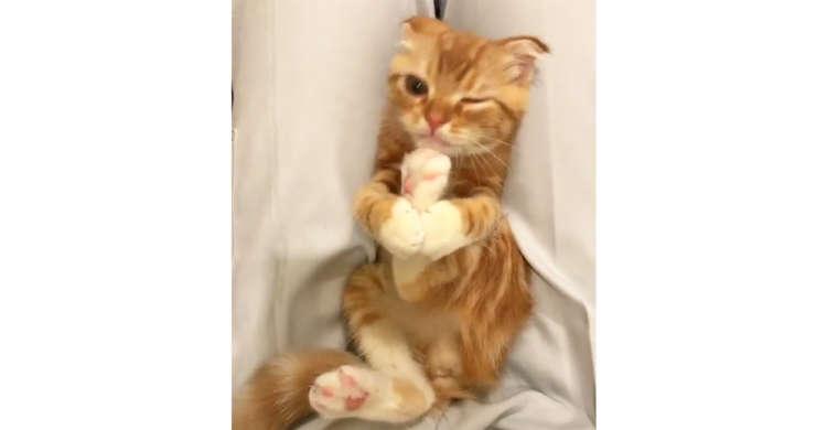 自分の足を美味しそうにペロペロする子ネコちゃん → ピンクの肉球がみるみる潤っていく…♡(20秒)