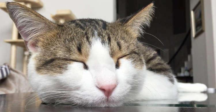 【昼寝ならぬ朝寝♪】のんびりしながら幸せそうに眠るニャンコさんに、ニヤニヤが止まらない(*´∀`)