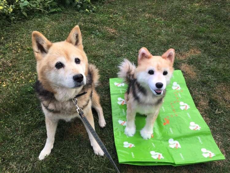 犬 ぬいぐるみ 保護犬 PECOHug ペコハグ 雑種犬 オーダーメイドぬいぐるみ