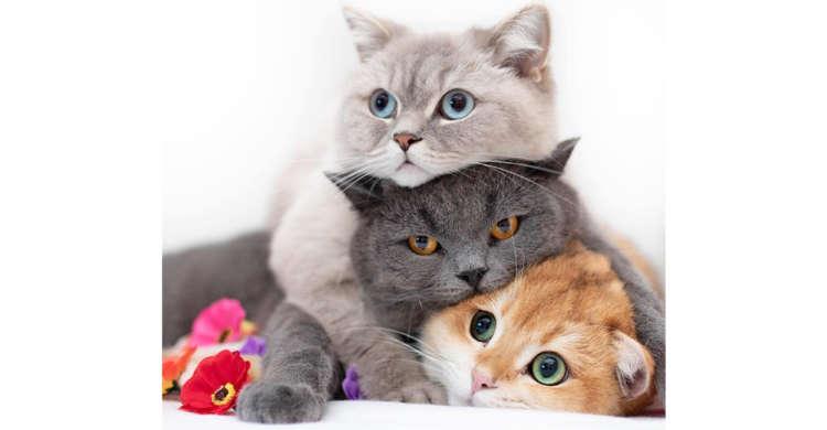 もちふわの『3色団子』登場! お顔や体をむぎゅっとくっつけ合う、3匹の仲良しニャンコズ♪ 8枚