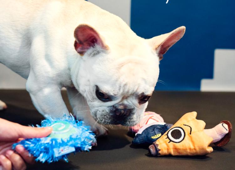 PECOBOX7月号『きもだめし』受付中♪ 愛犬が喜ぶギフトについて、詳しく解説します!