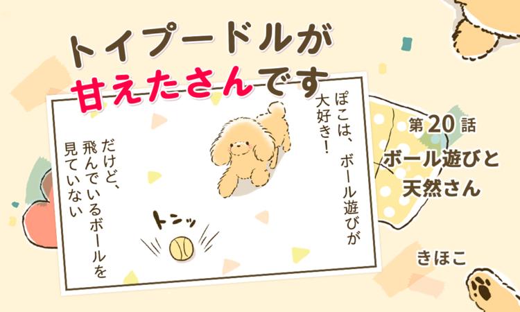 【まんが】第20話:【ボール遊びと天然さん】まんが描き下ろし連載♪トイプードルが甘えたさんです