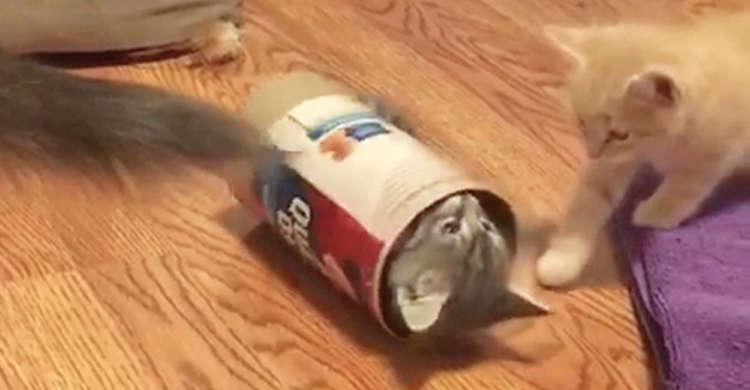 【子猫ホイホイ♪】1匹、また1匹と中へ…。魅惑たっぷりのトンネルに、取り憑かれちゃうニャンコたち♡