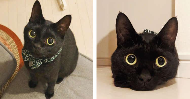 【魅力的すぎる瞳】おめめパッチリな黒猫さん。そんな目で見つめられたら…恋しちゃう♡(8枚)