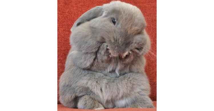 体の上から下まで全身がふわふわ♪ 思わず顔をうずめたくなる、もふもふボディのウサギさんに…きゅん♡