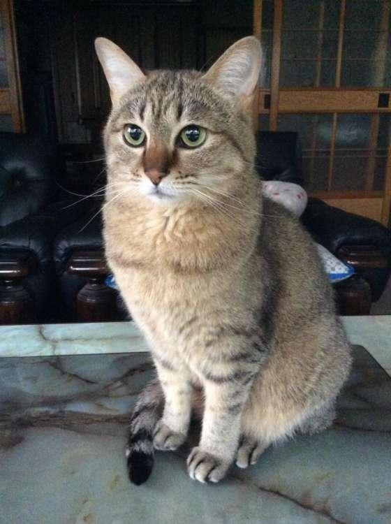 猫 ぬいぐるみ オーダーメイド オーダーメイドぬいぐるみ PECOHug ペコハグ