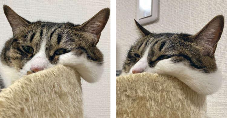 たぷ〜んとなったニャンコの頬♡ ハムスターもびっくりな垂れ具合に、ツンツンしたくなる〜(o´∀`)σ