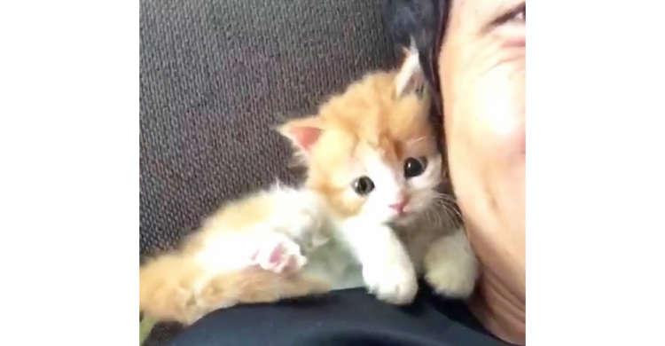 肩に乗りパパにおもいっきり求愛する子猫ちゃん。羨ましすぎる光景に、胸キュンが止まらない(*´ω`)♪