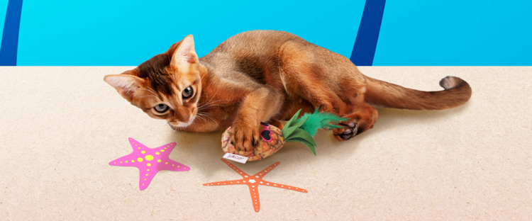 PECOBOX for Cats 8月号「ビーチリゾート」受付中♪愛猫のプレゼントについて解説!