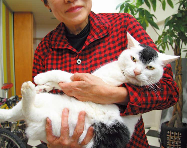 【猫びより】【特集 猫の奇跡】奇跡のモヒカン つるきち(辰巳出版)