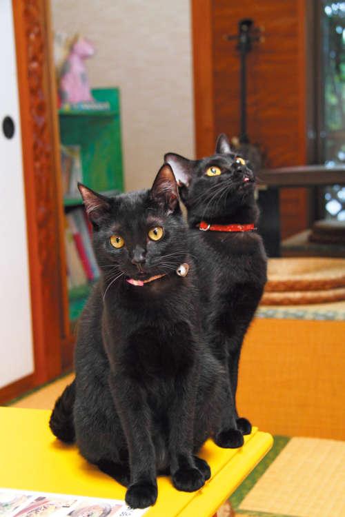 ひじき・おはぎ・黒丸子……と、見分けが付かない黒猫3兄弟がいます