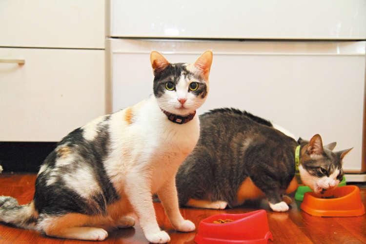 猫もごはんタイム。「いつか自家製チャーシュー食べてみたいにゃ~」