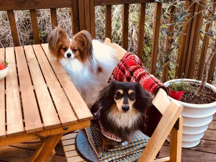 【熱海】に行ったらここ!愛犬と立ち寄りたい素敵カフェ2選