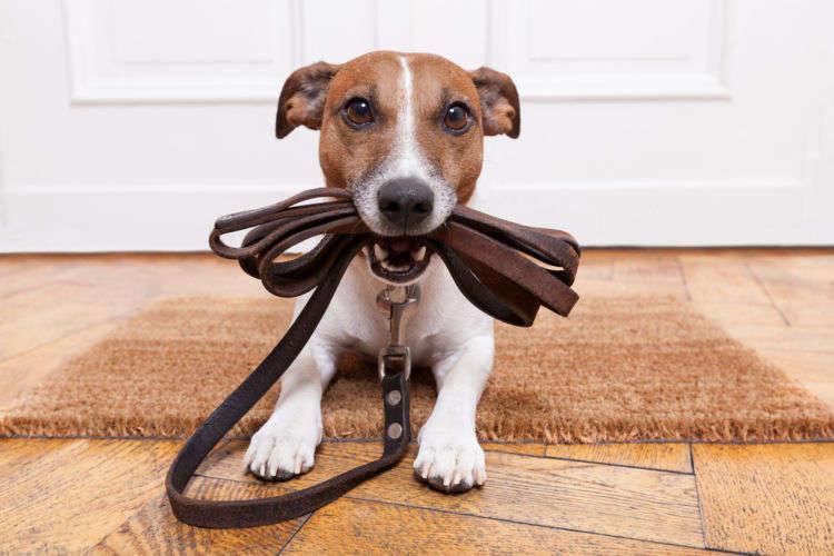犬の散歩に役立つ、便利なおすすめグッズ8選