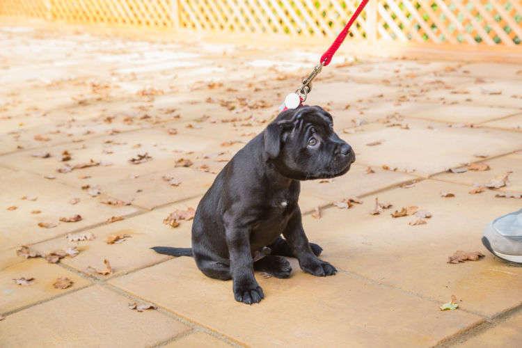 愛犬が散歩に行きたがらない!嫌がるその理由と対処法