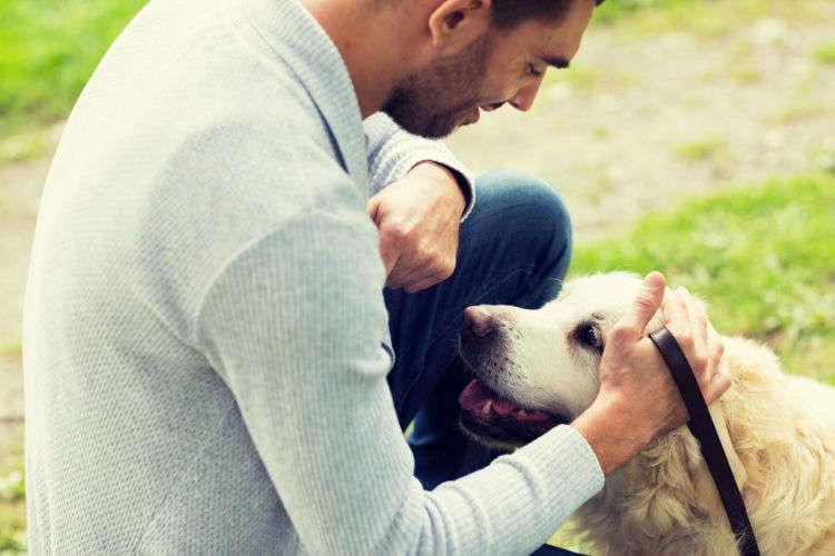 なぜ犬が散歩で歩かないの?その理由と対策を大公開