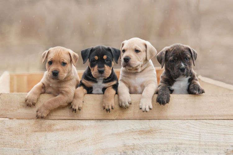 子犬の散歩はいつから始めたら良い?散歩デビューのタイミングを見極めよう