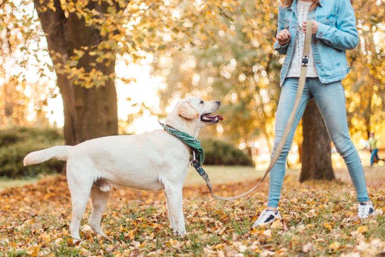 子犬のはじめてのお散歩!準備やコツを教えちゃいます