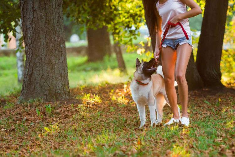 犬を散歩させるときのバッグの中身!絶対入れておきたい8品