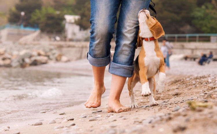"""愛犬のお散歩、適切な頻度は?""""ココ""""を観察して見極める!"""