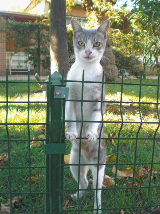 ラレリモスクの中庭で優雅に暮らす美猫さん