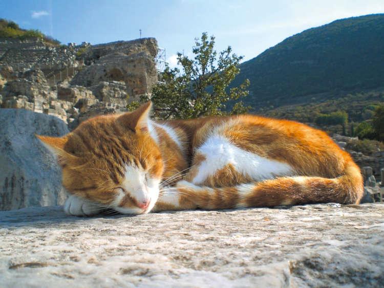 猫が街の風景に溶け込むキャッツ・パラダイス【from Turkey】