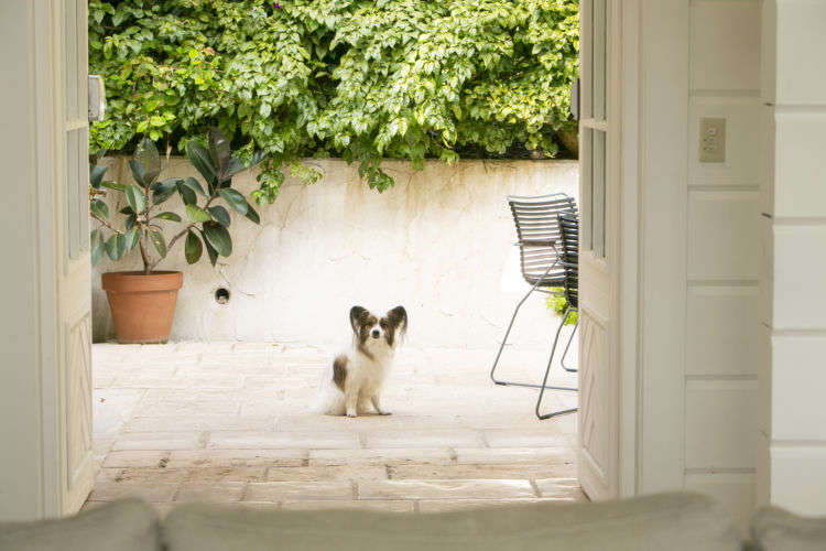 """【伊豆/河津】海沿いの一軒家で愛犬と自由気ままな休日を""""四季の蔵 Casa Della Nonna"""""""