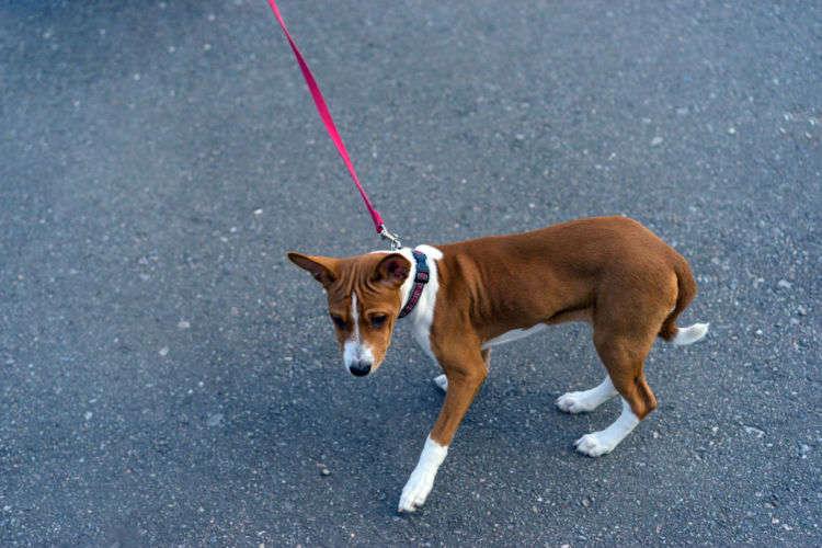 【犬の気持ち】犬が散歩で帰りたがる理由と対策方法