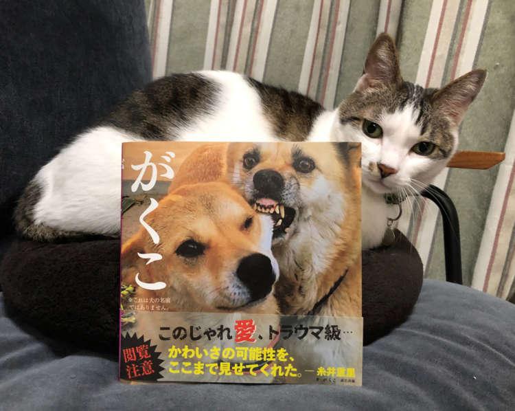 編集(裕)の愛猫ごまも呆れ顔。