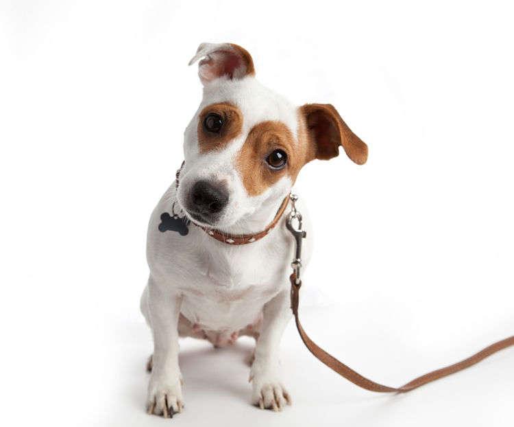 犬のリードの噛み癖や引っ張り癖を直そう