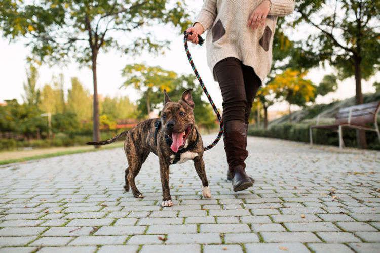 犬が散歩好きな理由とは?楽しく散歩するコツや注意点まで