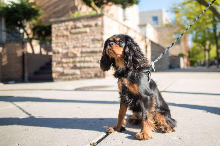 犬の散歩の適切な距離はどのくらい?運動量の測り方や注意点について