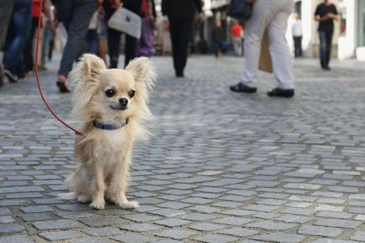 どうする?犬が散歩中に座る理由と対策を解説