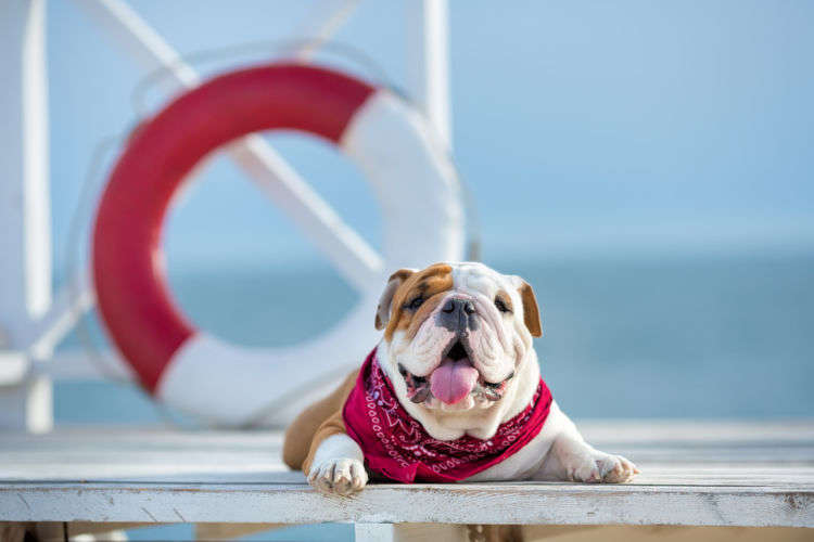 夏の愛犬との散歩を安全&快適にする秘訣